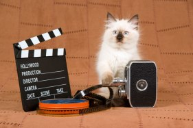 hollywood-kitten-camera